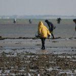 La pêche à pied : faire le bonheur des petits et des grands