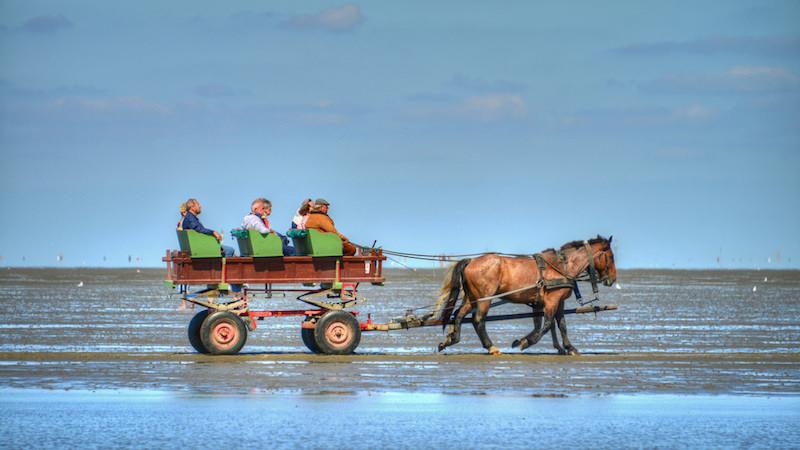 Photographie de touristes dans un chariot tiré sur la plage par deux chevaux, vue de côté