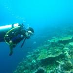 Quelle activité aquatique pratiquer à partir d'un bateau ?