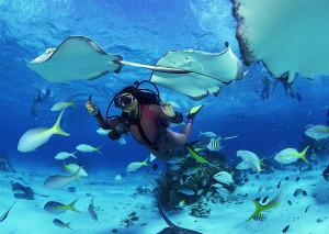 Plongée à Koh Tao, Thaïlande