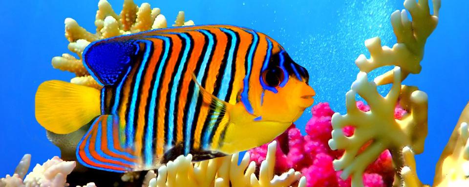 Photographie d'un poisson dans les eaux de l'ile Maurice