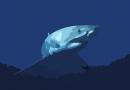 Les risques en mer: les requins
