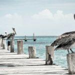 Souffler plus fort que la mer : une œuvre de Marine Place